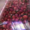 散称草莓13一斤牛奶草莓16一斤砂糖橘32一筐县城附近小寨附近想要的联系我微信管送
